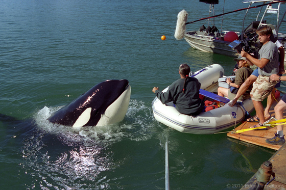 Free Willy Trilogy  Free Willy Animatronic Whale
